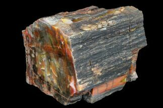 "3.7"" Vibrantly Colored, Polished Petrified Wood Section - Arizona For Sale, #113357"