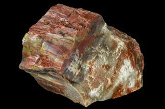 "6"" Vibrantly Colored, Polished Petrified Wood Section - Arizona For Sale, #113372"
