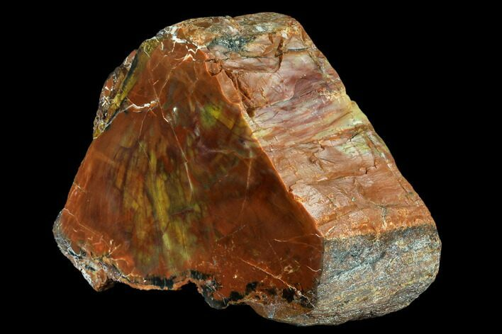 "5.7"" Vibrantly Colored, Polished Petrified Wood Section - Arizona"