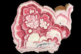 "6.3"" Flowery, Polished Rhodochrosite Slab - Argentina For Sale, #114245"