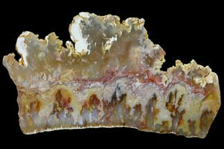 "Buy 5.9"" Regency Rose Agate Slab - Eastern Oregon - #114493"
