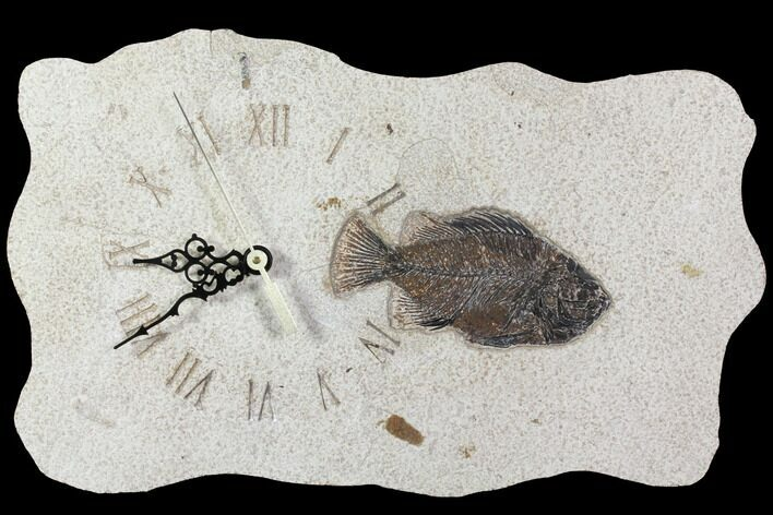 "14.5"" Wide Clock With Cockerellites Fish Fossil - Wyoming"