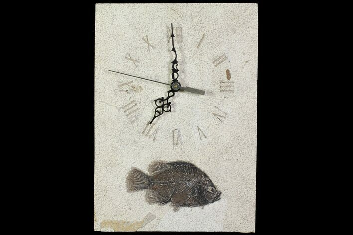 "11.7"" Tall Clock With Cockerellites Fish Fossil - Wyoming"