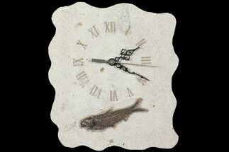 "Buy 11.0"" Tall Fossil Fish (Knightia) Clock - Wyoming - #114328"