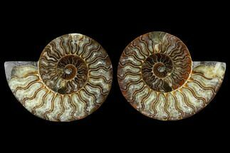 "5.9"" Sliced Ammonite Fossil (Pair) - Agatized For Sale, #115304"