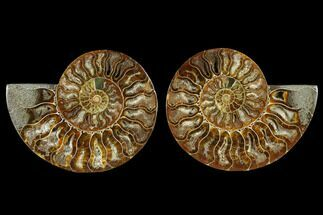 "5.2"" Sliced Ammonite Fossil (Pair) - Crystal Lined Chambers For Sale, #115319"