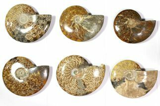 Various - Fossils For Sale - #116655