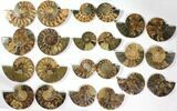 "Wholesale Lot: 4.1 to 5.8"" Cut/Polished Ammonite Fossil - 11 Pairs - #117037-3"