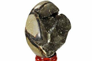 "Buy 2.9"" Septarian ""Dragon Egg"" Geode - Black Crystals - #118723"