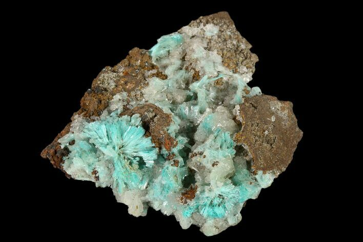 "1.5"" Calcite & Fibrous Aurichalcite Crystal Association - Mexico"