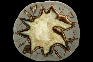 "Buy 5.3"" Polished Septarian Slab - Utah - #119701"