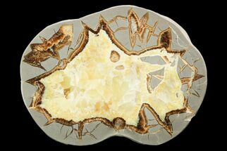 "Buy 7.3"" Polished Septarian Slab - Utah - #119743"