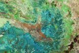 "6"" Chrysocolla & Malachite Slab From Arizona - Clear Coated - #119745-1"