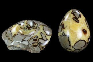 Septarian - Fossils For Sale - #120258
