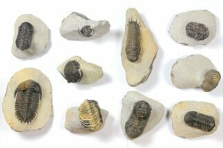 Various - Fossils For Sale - #119925