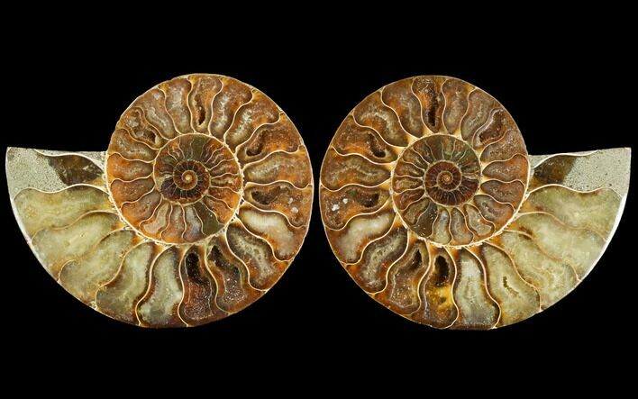 "5"" Sliced Ammonite Fossil (Pair) - Agatized"