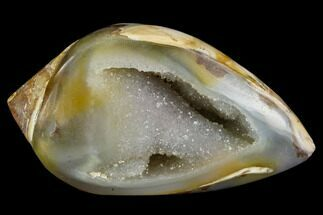 "1.55"" Chalcedony Replaced Gastropod With Druzy Quartz - India For Sale, #123335"