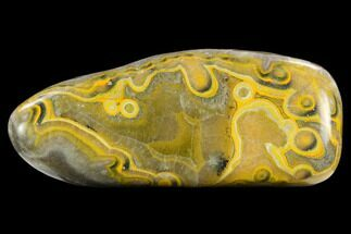 "5.7"" Polished Bumblebee Jasper Section - Indonesia For Sale, #124367"