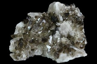 "5.1"" Smoky Quartz Crystal Cluster - Brazil For Sale, #124586"