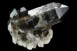 Quartz var. Smoky - Fossils For Sale - #124587