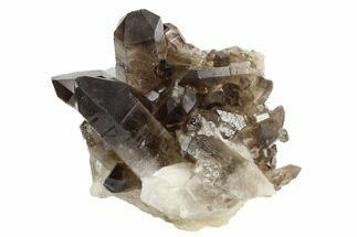 "Buy 3.2"" Dark Smoky Quartz Crystal Cluster - Brazil - #124576"