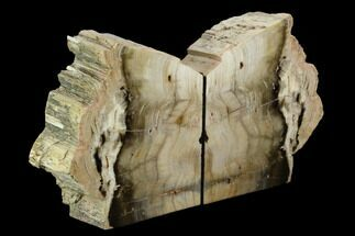 "5.9"" Petrified Wood Bookends - Oregon For Sale, #125078"