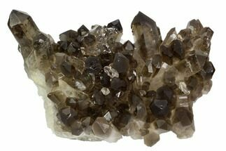 "Buy 5"" Smoky Quartz Crystal Cluster - Brazil - #124606"