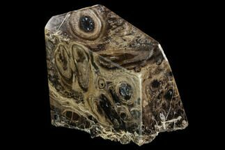 "6.1"" Polished Fossil Stromatolite Colony on Reed - Utah For Sale, #123434"