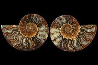 "Buy 3.15"" Sliced Ammonite Fossil (Pair) - Agatized - #125005"