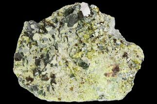 "2.4"" Garnet, Diopside, Epidote & Biotite Association - Afghanistan For Sale, #122660"
