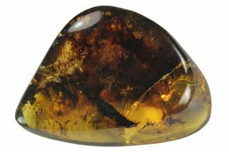 "Buy 1.3""  Polished Chiapas Amber (4 grams) - Mexico - #114823"