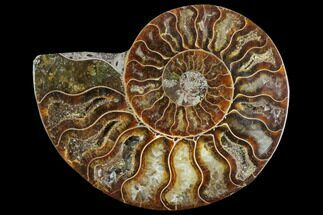 "3.1"" Agatized Ammonite Fossil (Half) - Madagascar For Sale, #125072"