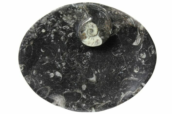"6.0"" Oval Shaped Fossil Goniatite Dish - Morocco"