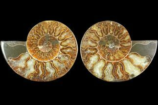 "4.1"" Sliced Ammonite Fossil (Pair) - Agatized For Sale, #125027"