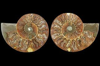 "Buy 3.65"" Sliced Ammonite Fossil (Pair) - Agatized - #125029"
