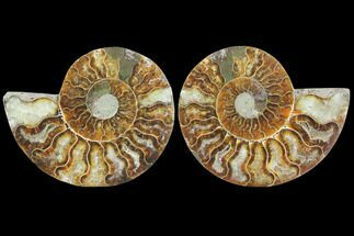 "Buy 3.65"" Sliced Ammonite Fossil (Pair) - Agatized - #125041"