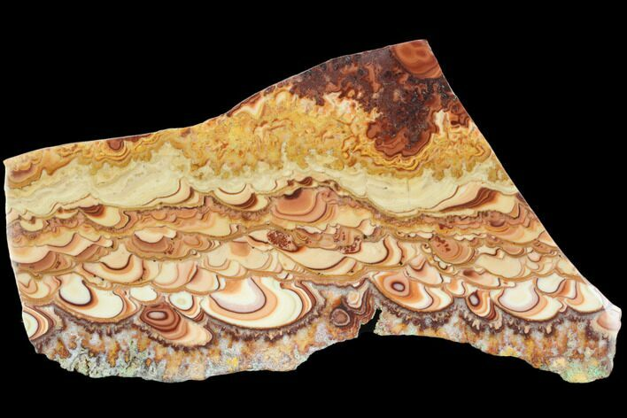 "7.6"" Polished Slab Of Rolling Hills Dolomite - Mexico"