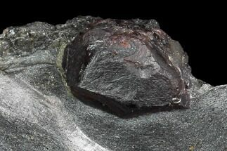 Garnet var. Almandine & Graphite - Fossils For Sale - #127764