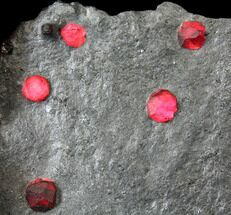 "3.5"" Plate of Twenty Red Embers Garnets in Graphite - Massachusetts For Sale, #127799"