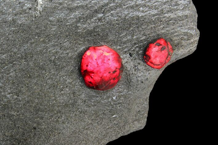 "2.3"" Plate of Two Red Embers Garnet in Graphite - Massachusetts"