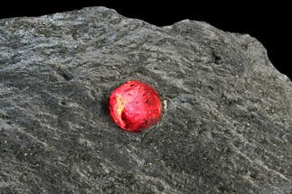 Red Embers Garnet in Graphite - Massachusetts For Sale, #127829