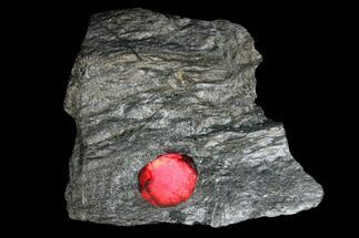 Garnet var. Almandine & Graphite - Fossils For Sale - #127830