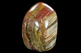 "Buy 5.4"" Tall, Free-Standing, Polished Petrified Wood - Madagascar - #127897"