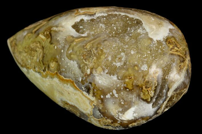 "1.7"" Chalcedony Replaced Gastropod With Druzy Quartz - India"