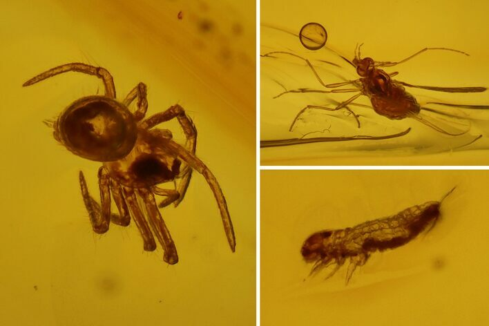Detailed Fossil Spider, Springtail and Fly in Baltic Amber