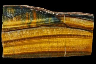 "Buy 3.1"" Polished Tiger's Eye Section - South Africa - #128443"