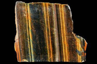 "2.8"" Polished Tiger's Eye Section - South Africa For Sale, #128459"