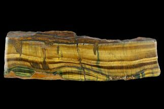 "Buy 6.5"" Polished Tiger's Eye Section - South Africa - #128488"