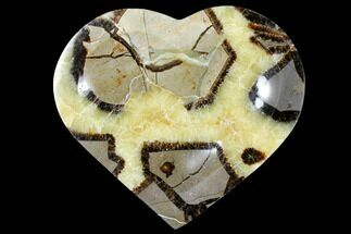 Septarian - Fossils For Sale - #126795