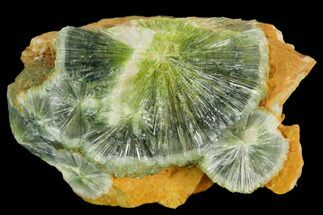 Wavellite - Fossils For Sale - #127116